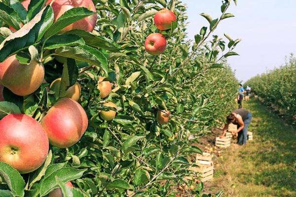 Accueil la source du verger - Ou trouver des caisses u00e0 pommes ...